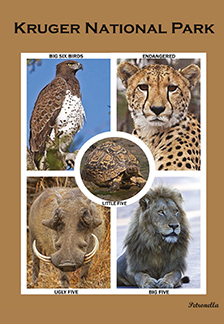 Kruger National Park cover